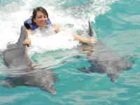 Nado con Delfines COMPLETO