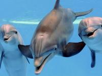 Nado con Delfines MEDIO